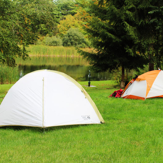 Camping_Trail_Pond_Life